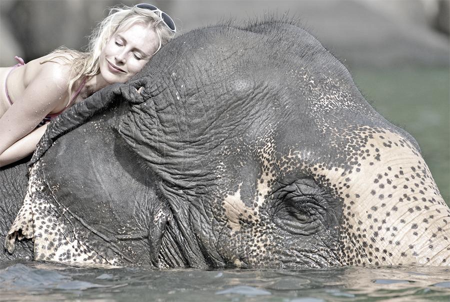 Elischeba schlafen Elefant