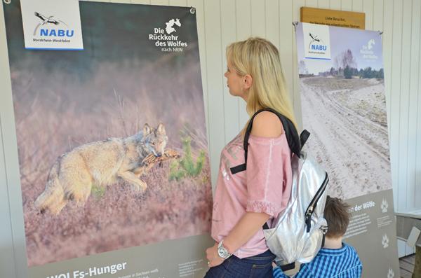 Wolf Ausstellung NRW