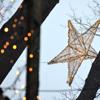 Weihnachtsstern auf dem Waldweihnachtsmarkt Velen