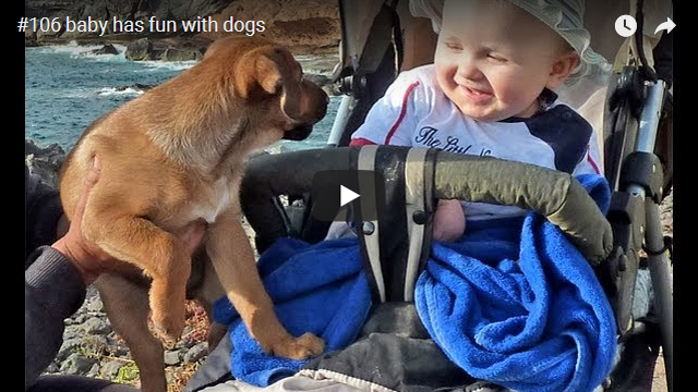 ElischebaTV_106_640x360 baby has fun with dogs