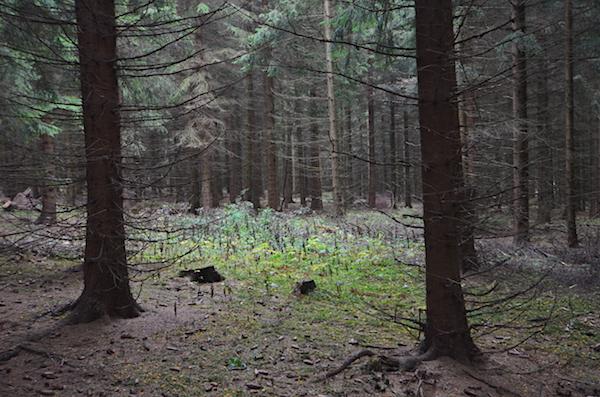 Wald Ost-Erzgebirge